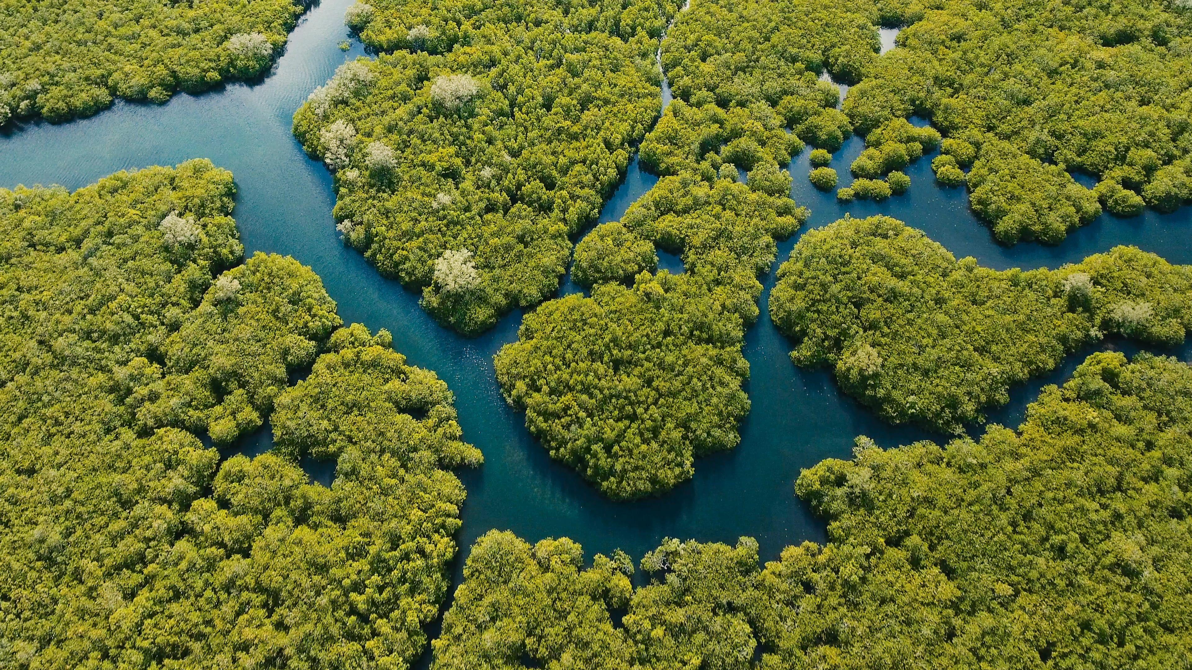 contribuimos a la proteccion del medio ambiente